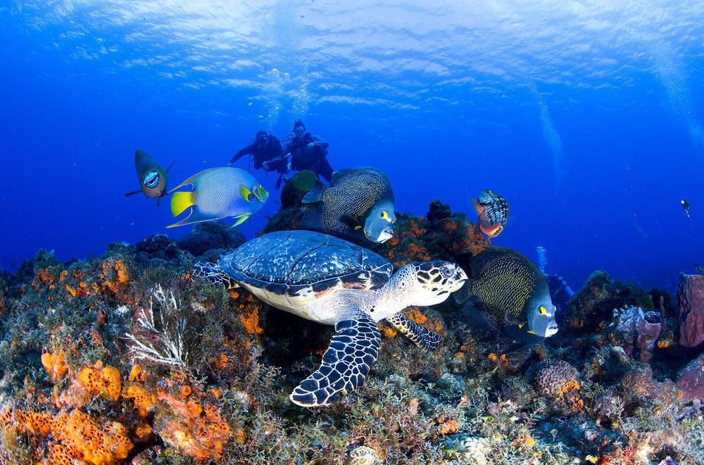 Cozumel: A Diver's Paradise